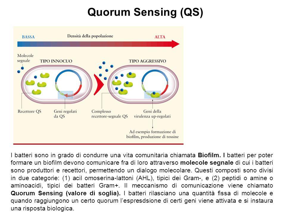Quorum Sensing (QS)