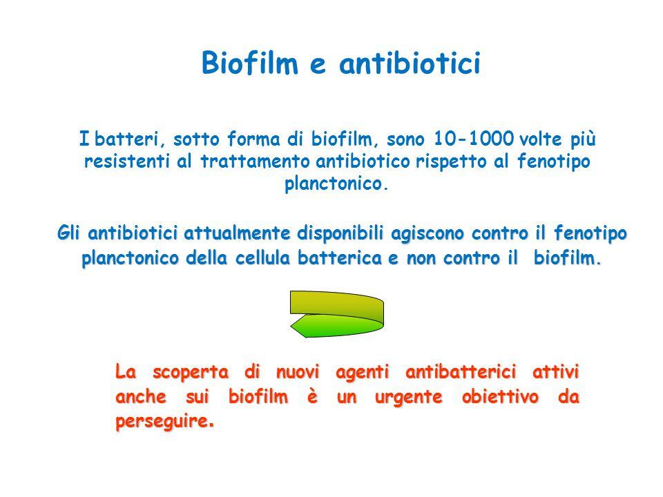 Biofilm e antibiotici