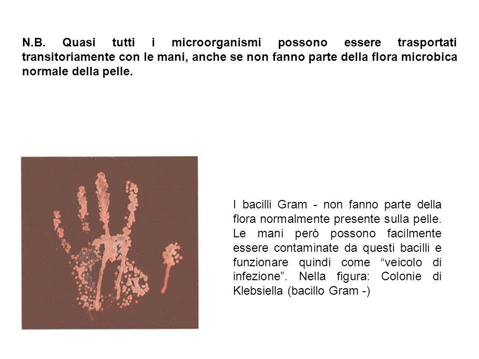 N.B. Quasi tutti i microorganismi possono essere trasportati transitoriamente con le mani, anche se non fanno parte della flora microbica normale della pelle.