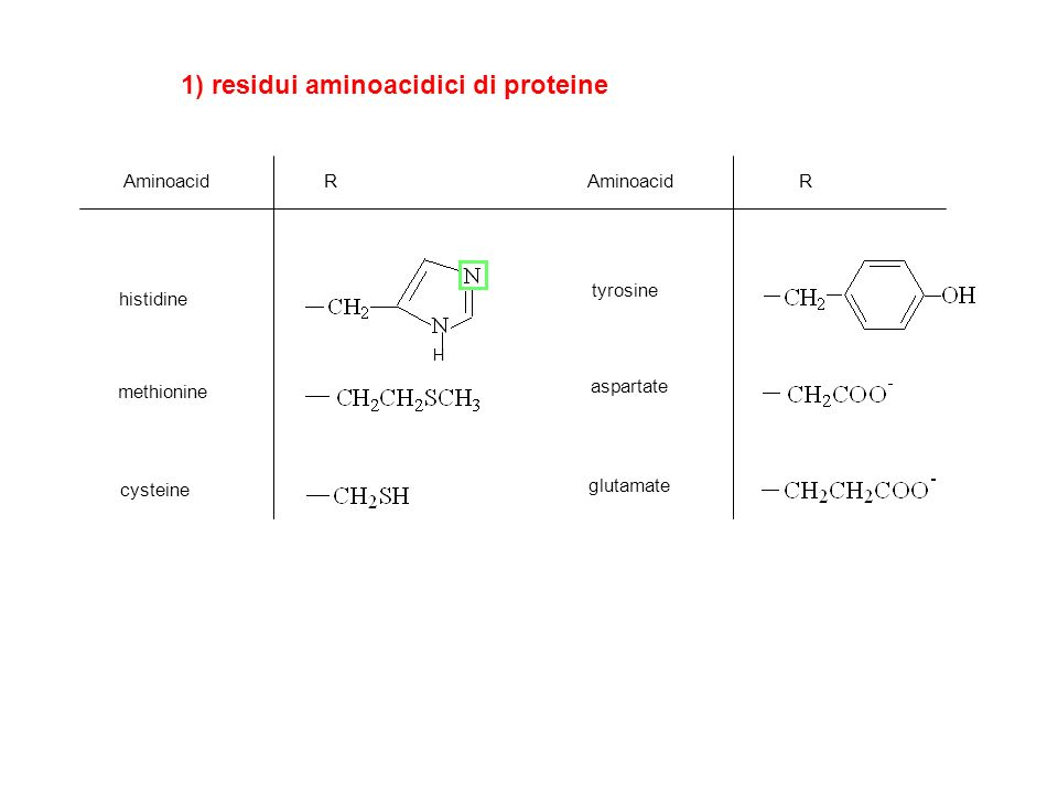 1) residui aminoacidici di proteine