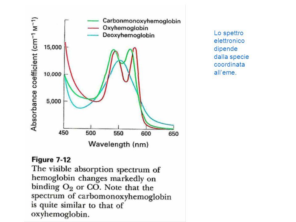 Lo spettro elettronico dipende dalla specie coordinata all'eme.
