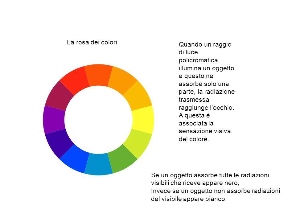 La rosa dei colori