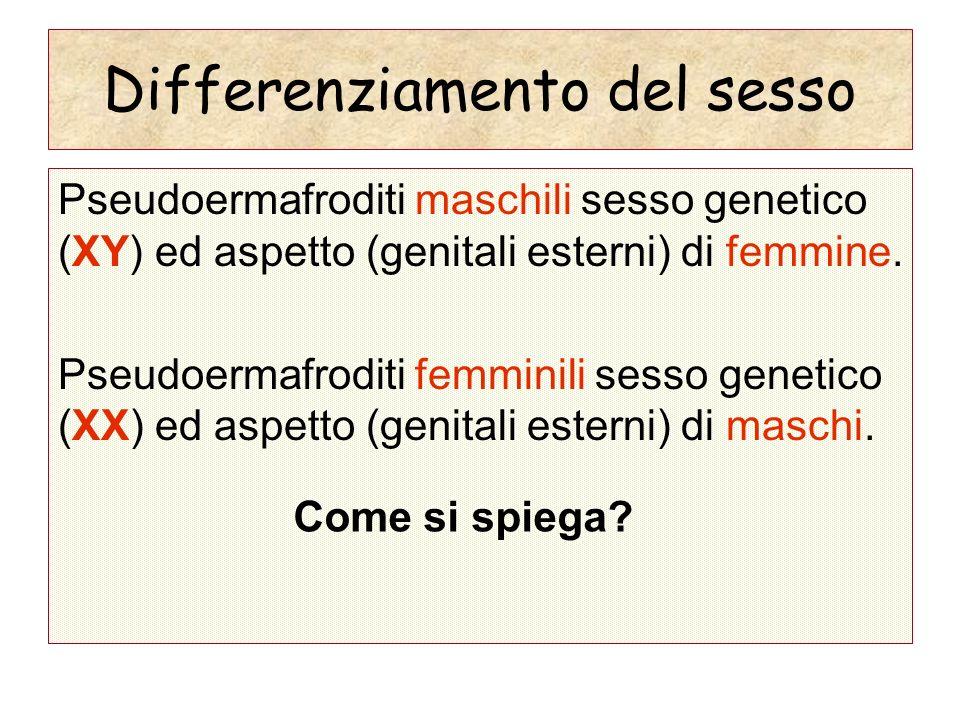 Differenziamento del sesso