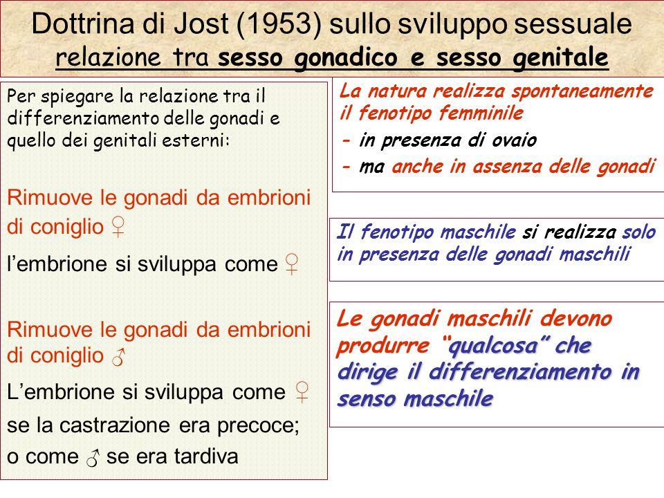 Dottrina di Jost (1953) sullo sviluppo sessuale relazione tra sesso gonadico e sesso genitale