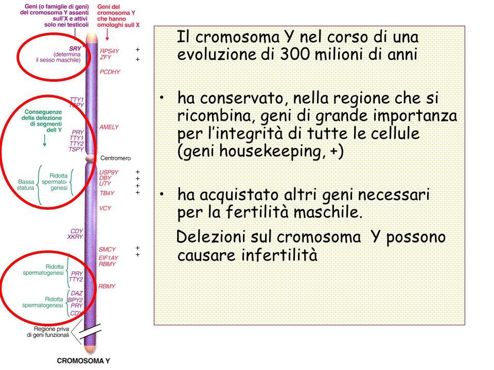 Delezioni sul cromosoma Y possono causare infertilità