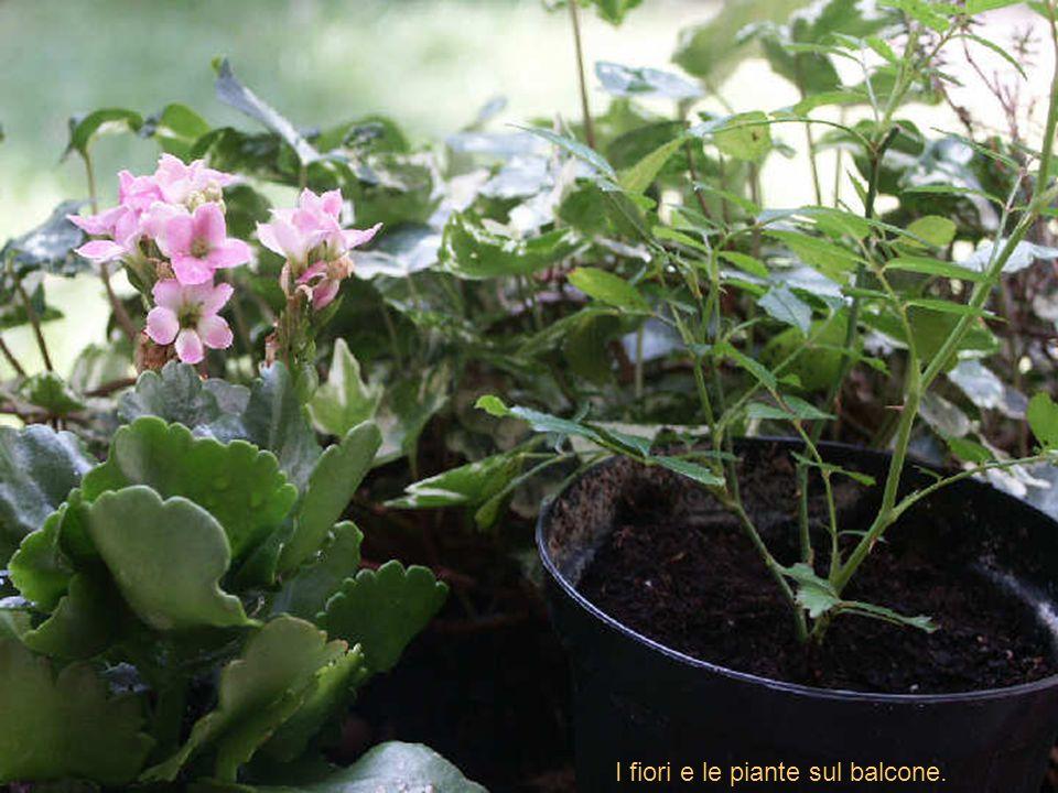 I fiori e le piante sul balcone.