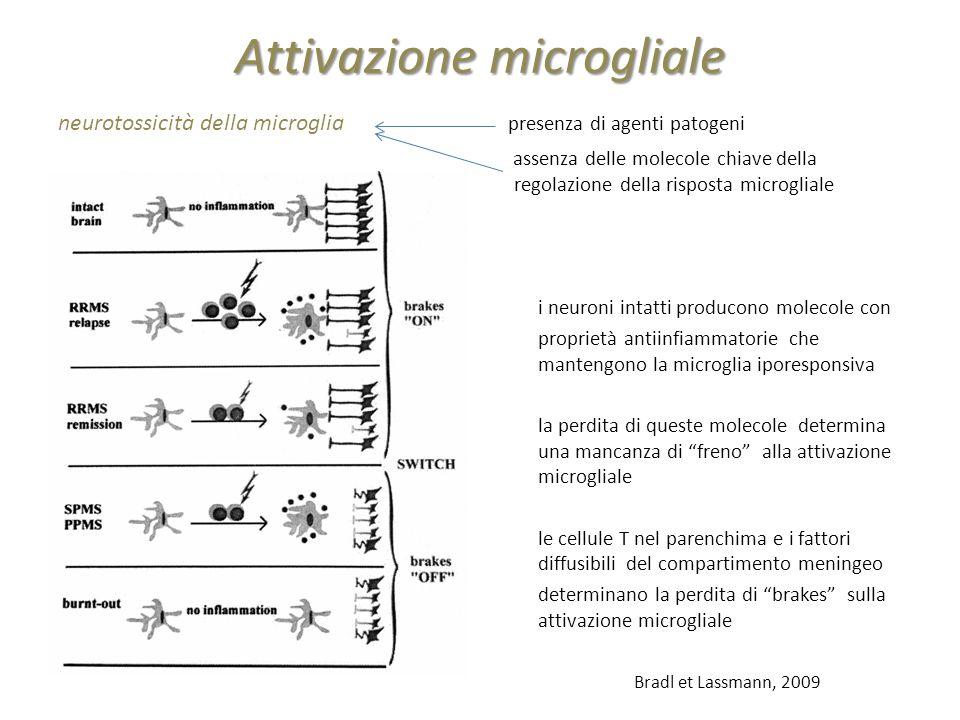 Attivazione microgliale