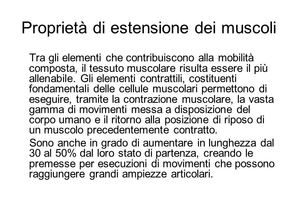 Proprietà di estensione dei muscoli