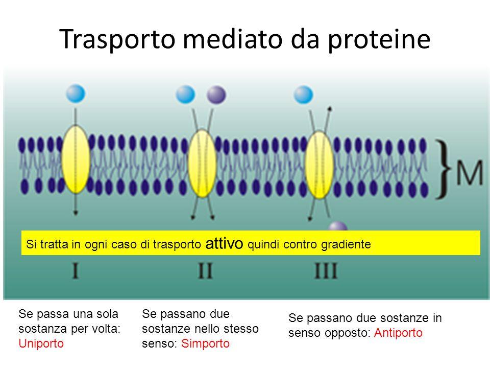 Trasporto mediato da proteine