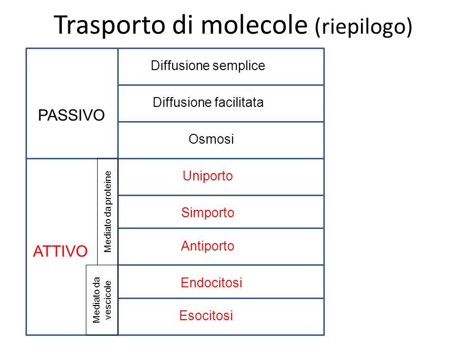 Trasporto di molecole (riepilogo)