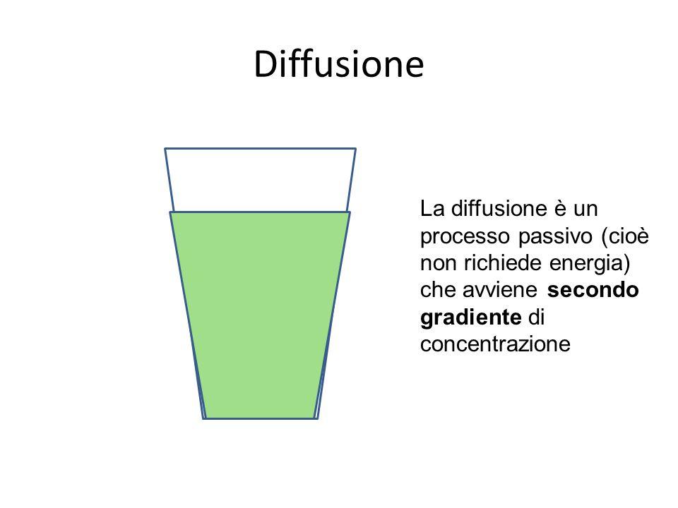 Diffusione La diffusione è un processo passivo (cioè non richiede energia) che avviene secondo gradiente di concentrazione.