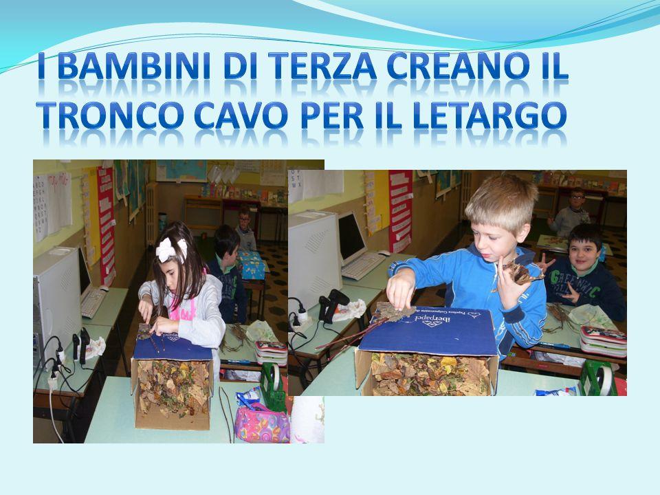 I bambini di terza creano il tronco cavo per il letargo