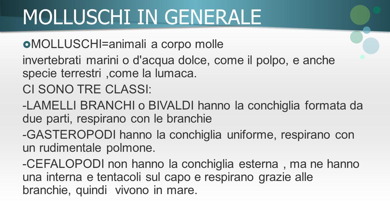 MOLLUSCHI IN GENERALE MOLLUSCHI=animali a corpo molle