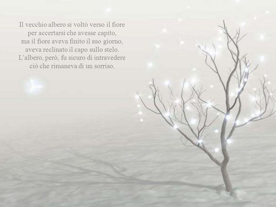 Il vecchio albero si voltò verso il fiore