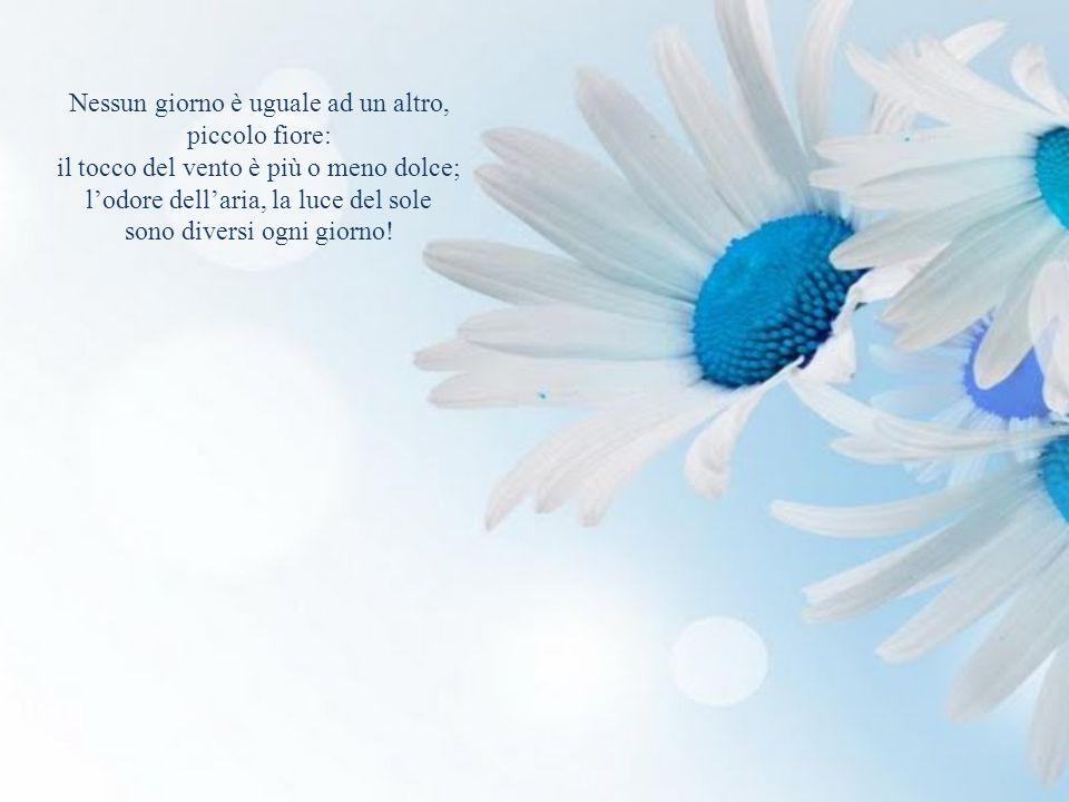 Nessun giorno è uguale ad un altro, piccolo fiore: