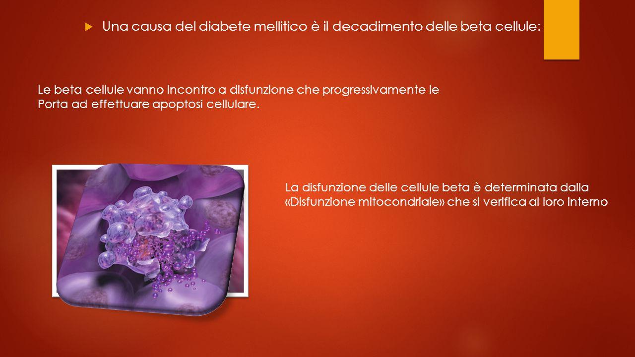 Una causa del diabete mellitico è il decadimento delle beta cellule: