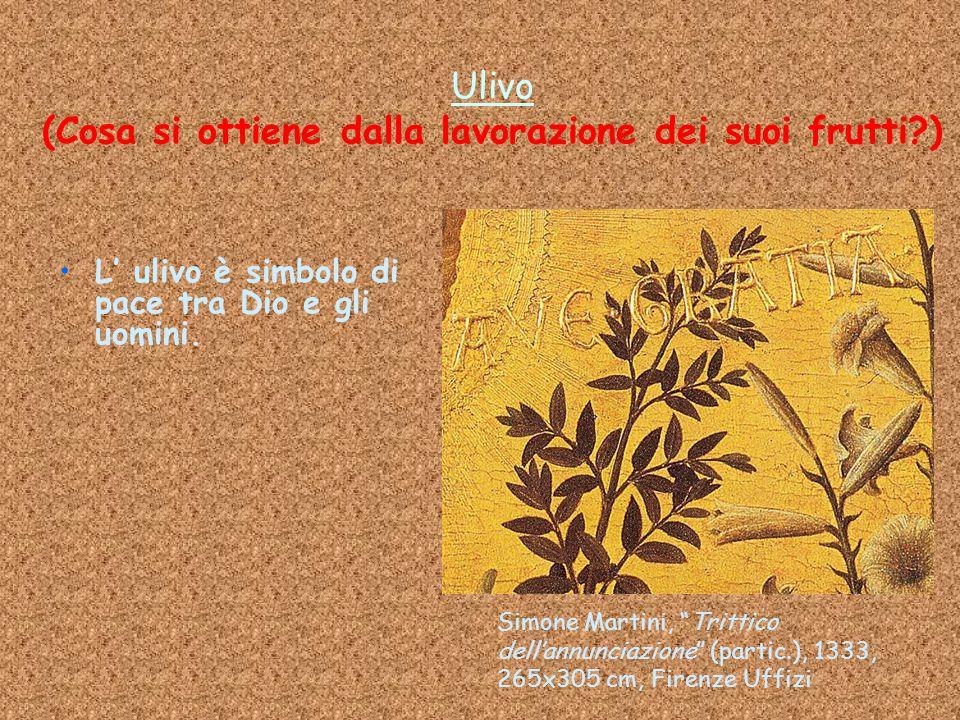 Ulivo (Cosa si ottiene dalla lavorazione dei suoi frutti )