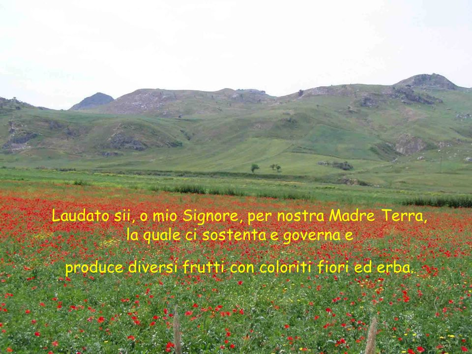 Laudato sii, o mio Signore, per nostra Madre Terra, la quale ci sostenta e governa e produce diversi frutti con coloriti fiori ed erba.