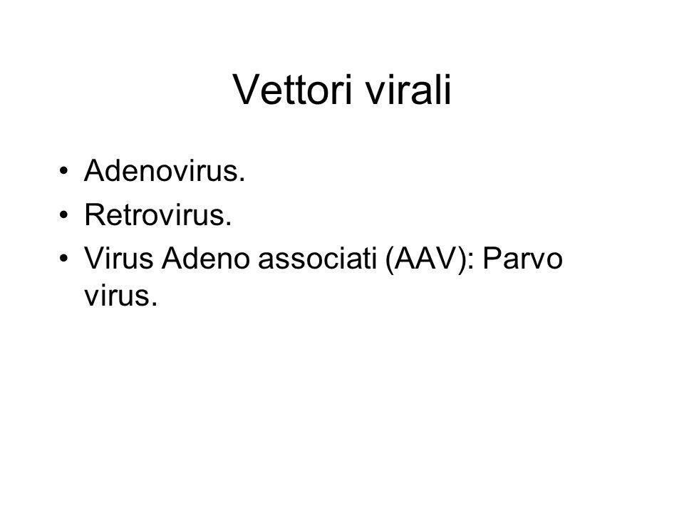 Vettori virali Adenovirus. Retrovirus.