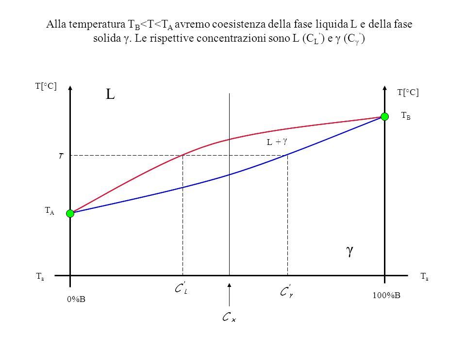 Alla temperatura TB<T<TA avremo coesistenza della fase liquida L e della fase solida γ. Le rispettive concentrazioni sono L (CL') e γ (Cγ')