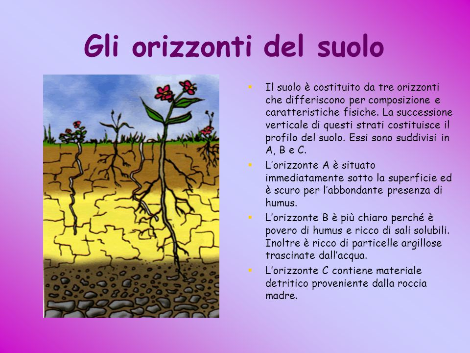 Gli orizzonti del suolo
