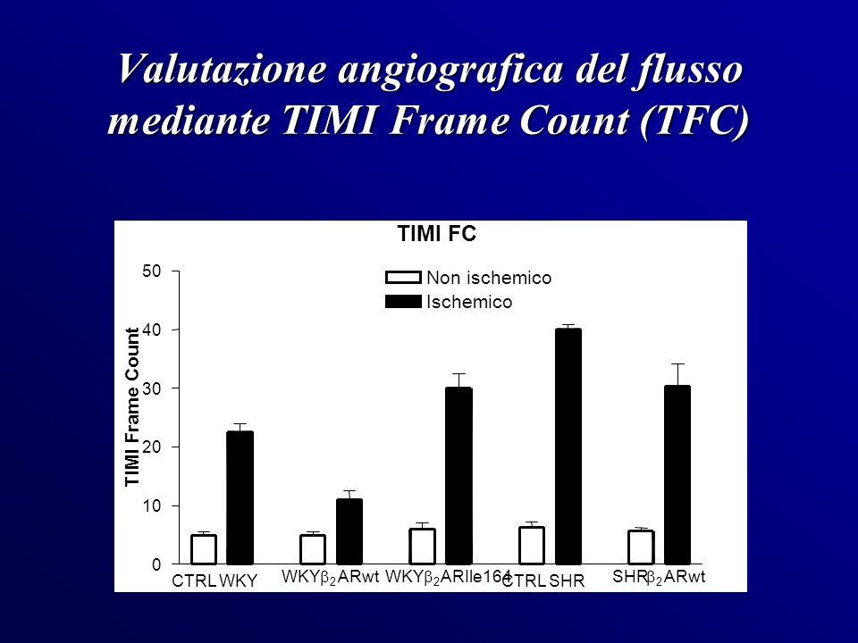 Valutazione angiografica del flusso mediante TIMI Frame Count (TFC)