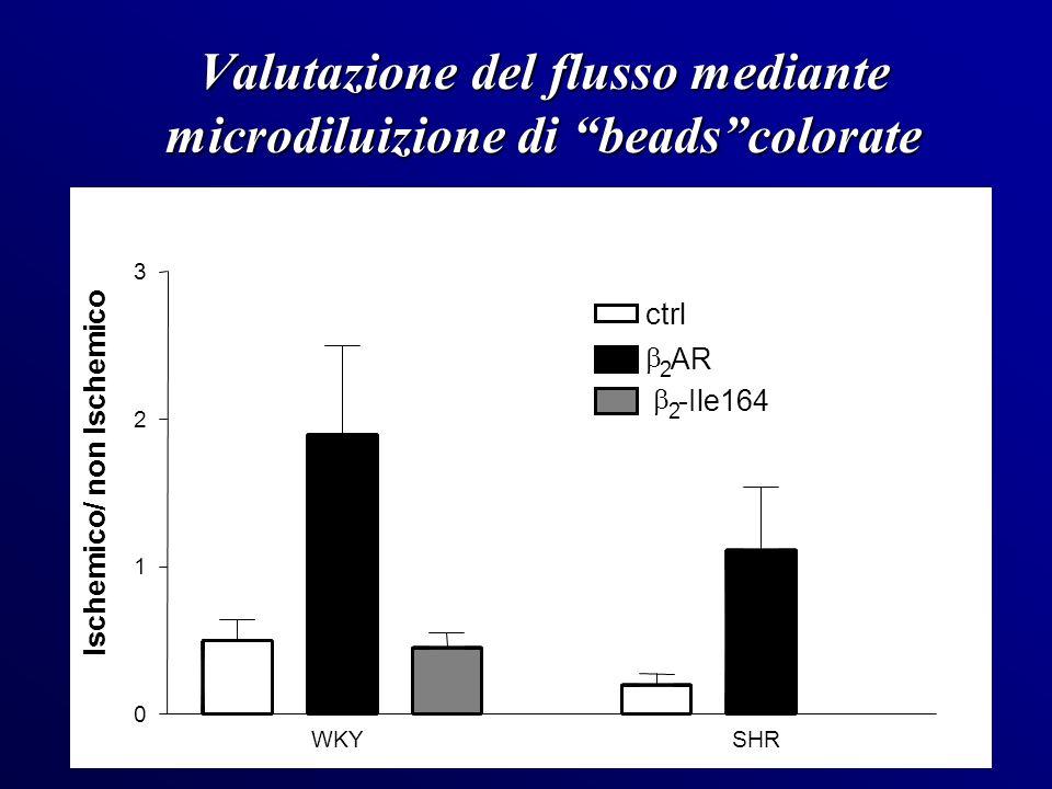 Valutazione del flusso mediante microdiluizione di beads colorate