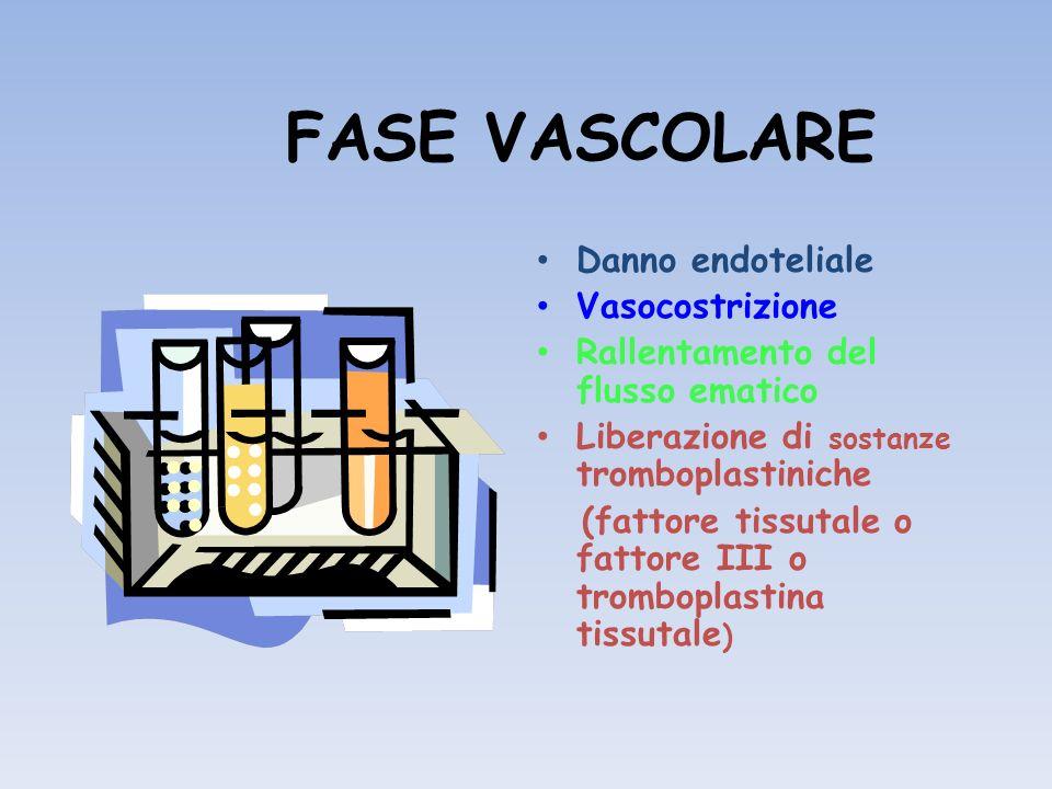 FASE VASCOLARE Danno endoteliale Vasocostrizione