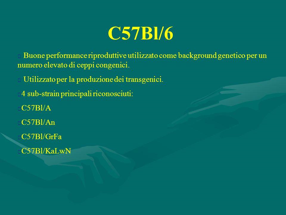 C57Bl/6 Buone performance riproduttive utilizzato come background genetico per un numero elevato di ceppi congenici.