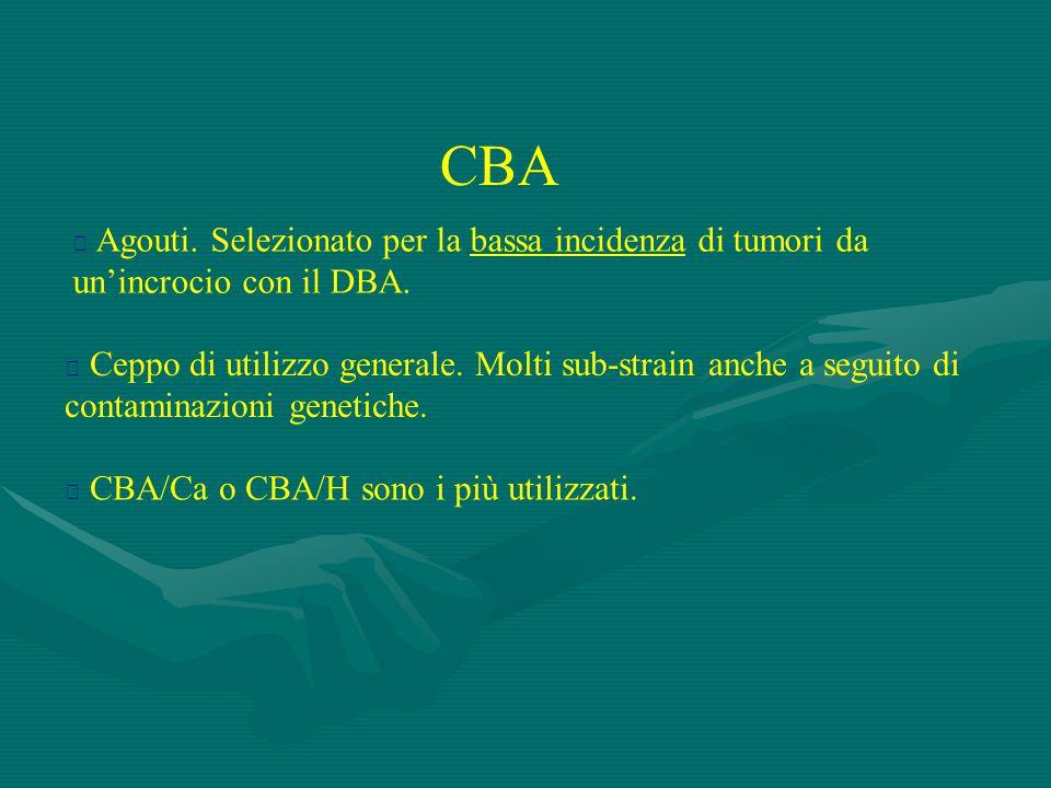 CBA Agouti. Selezionato per la bassa incidenza di tumori da un'incrocio con il DBA.