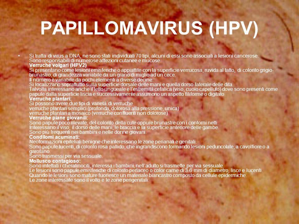 PAPILLOMAVIRUS (HPV)