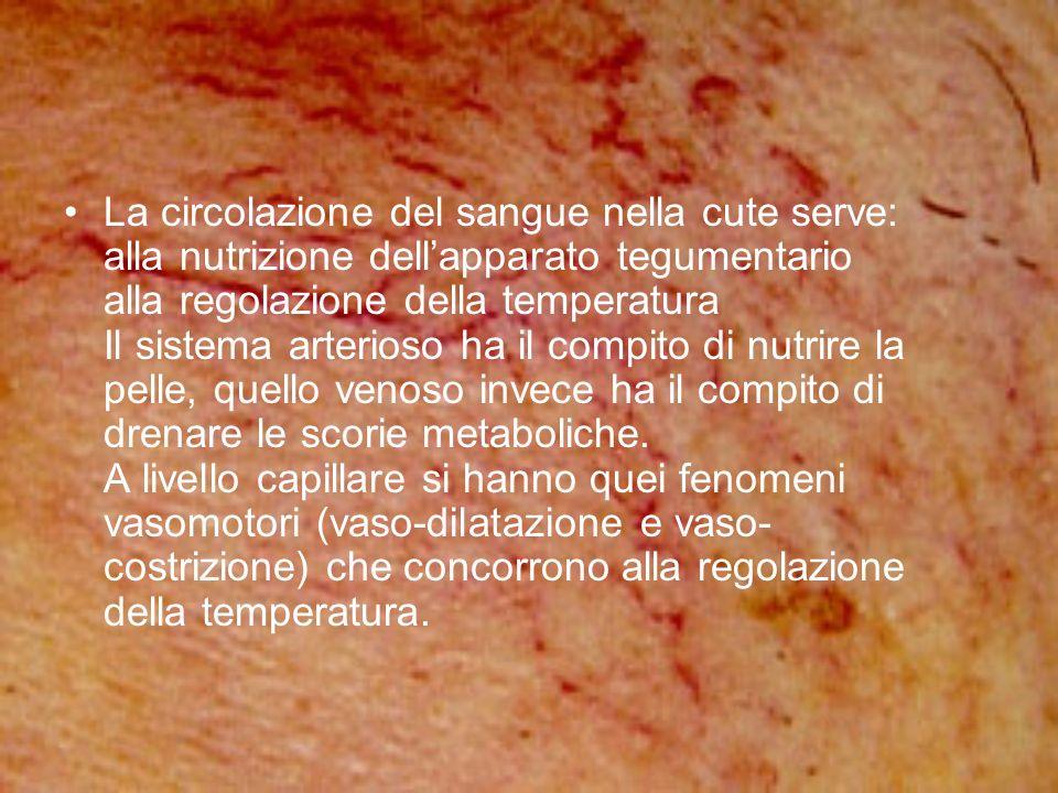La circolazione del sangue nella cute serve: alla nutrizione dell'apparato tegumentario alla regolazione della temperatura Il sistema arterioso ha il compito di nutrire la pelle, quello venoso invece ha il compito di drenare le scorie metaboliche.
