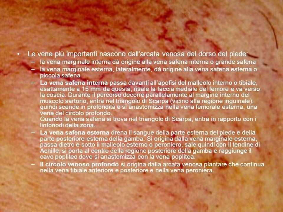 Le vene più importanti nascono dall'arcata venosa del dorso del piede: