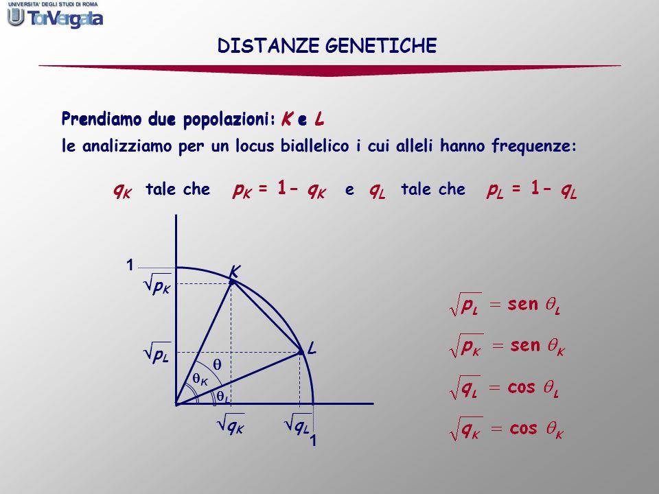 DISTANZE GENETICHE qK pK qL pL Prendiamo due popolazioni: K e L