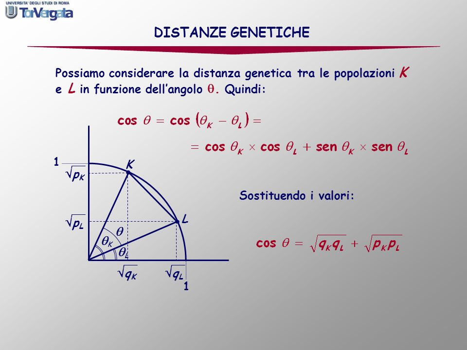 DISTANZE GENETICHE qL K L  qK pK pL