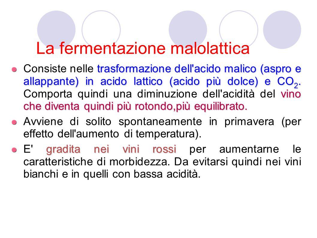 La fermentazione malolattica