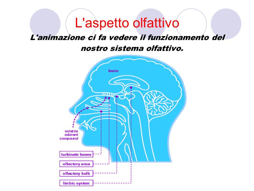 L aspetto olfattivo L animazione ci fa vedere il funzionamento del nostro sistema olfattivo.