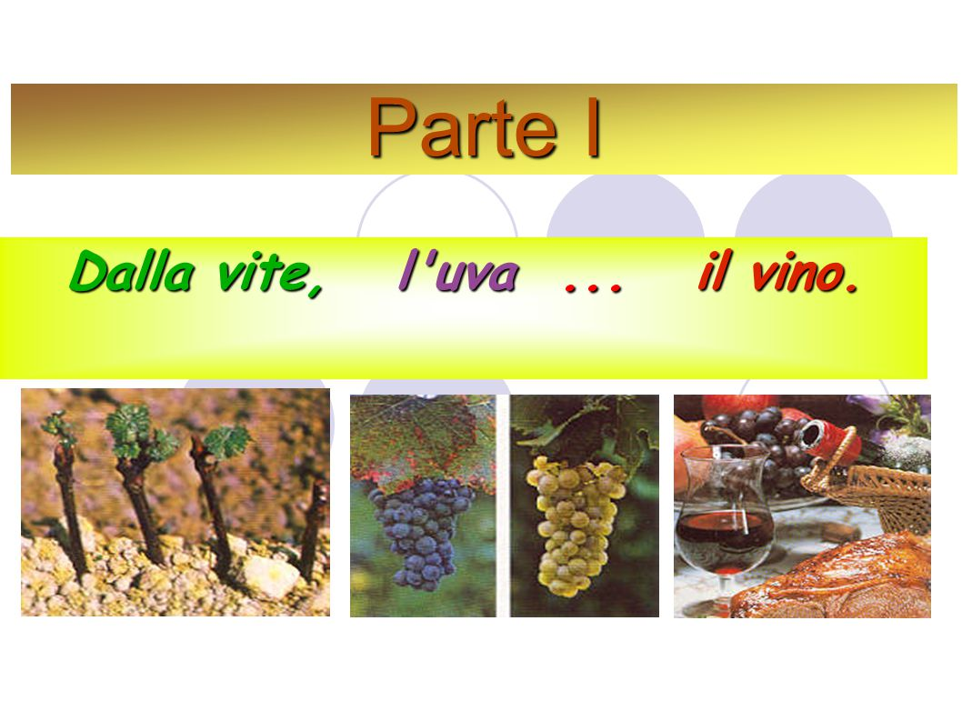 Parte I Dalla vite, l uva ... il vino.