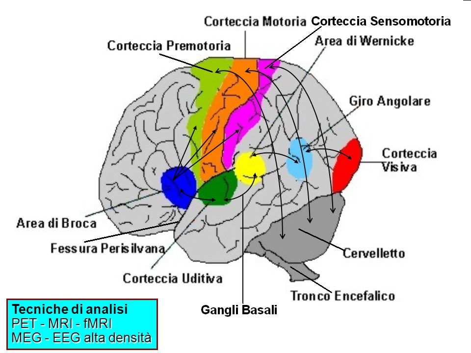 Tecniche di analisi PET - MRI - fMRI MEG - EEG alta densità