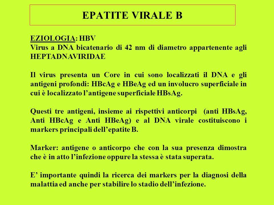 EPATITE VIRALE B EZIOLOGIA: HBV