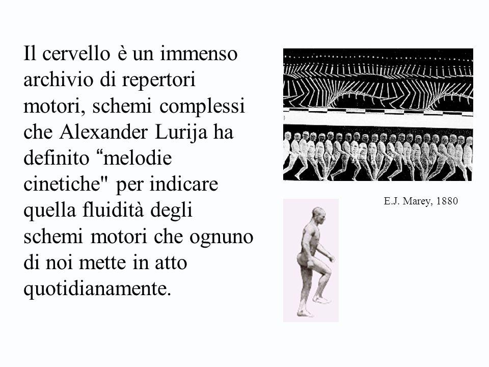 Il cervello è un immenso archivio di repertori motori, schemi complessi che Alexander Lurija ha definito melodie cinetiche per indicare quella fluidità degli schemi motori che ognuno di noi mette in atto quotidianamente.