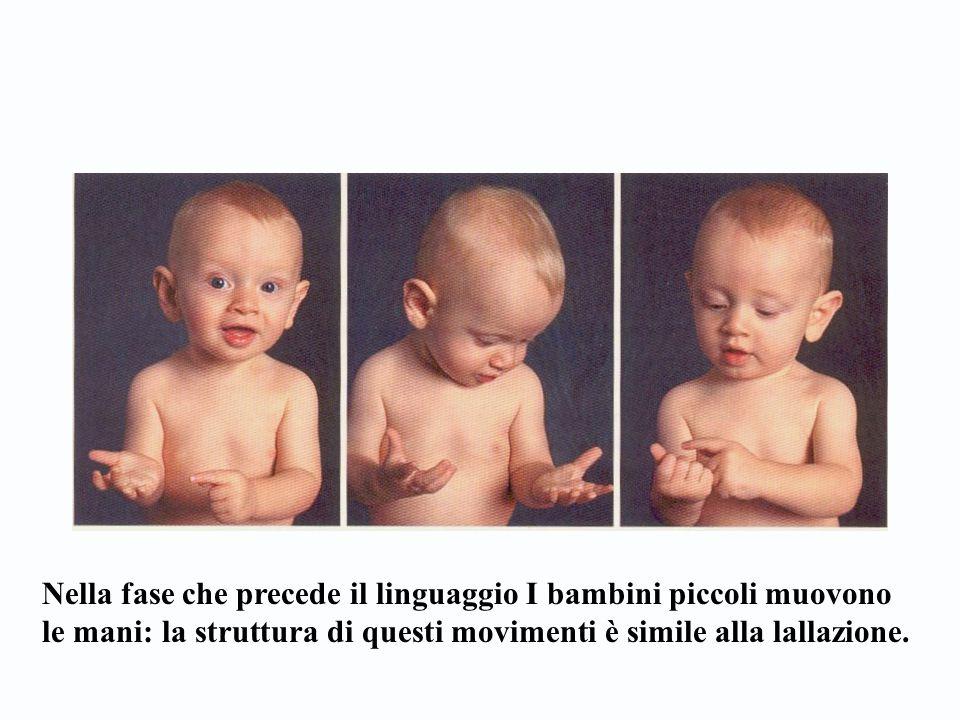 Nella fase che precede il linguaggio I bambini piccoli muovono le mani: la struttura di questi movimenti è simile alla lallazione.