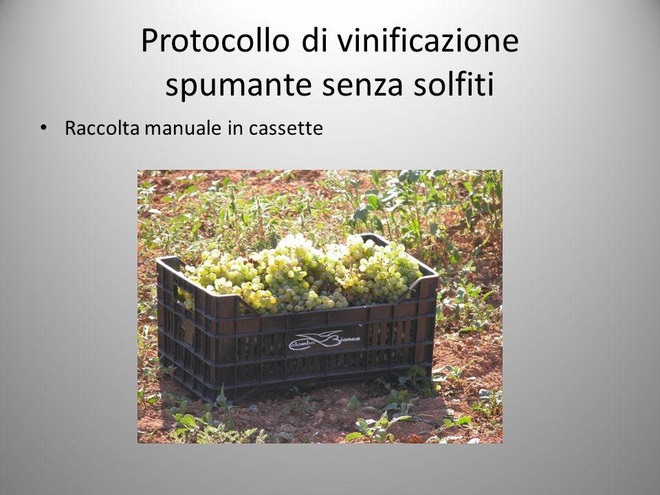 Protocollo di vinificazione spumante senza solfiti