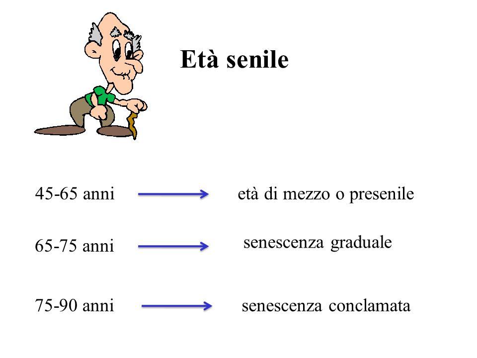 Età senile 45-65 anni età di mezzo o presenile senescenza graduale