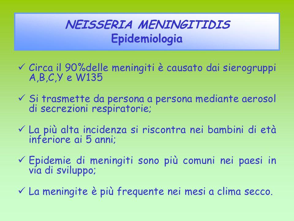 NEISSERIA MENINGITIDIS Epidemiologia