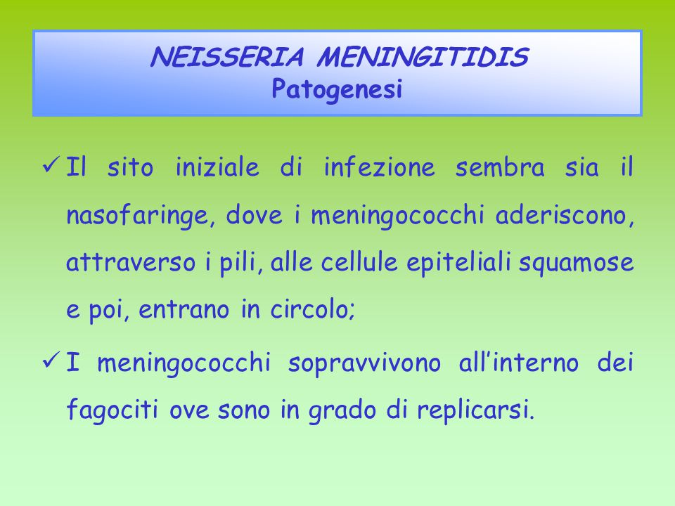 NEISSERIA MENINGITIDIS Patogenesi