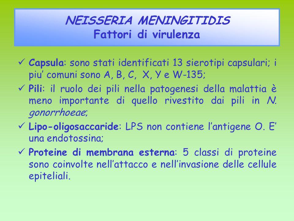NEISSERIA MENINGITIDIS Fattori di virulenza