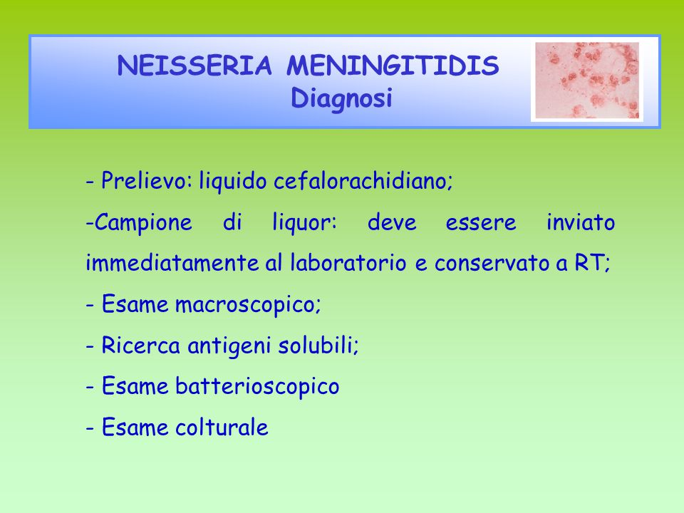 NEISSERIA MENINGITIDIS Diagnosi