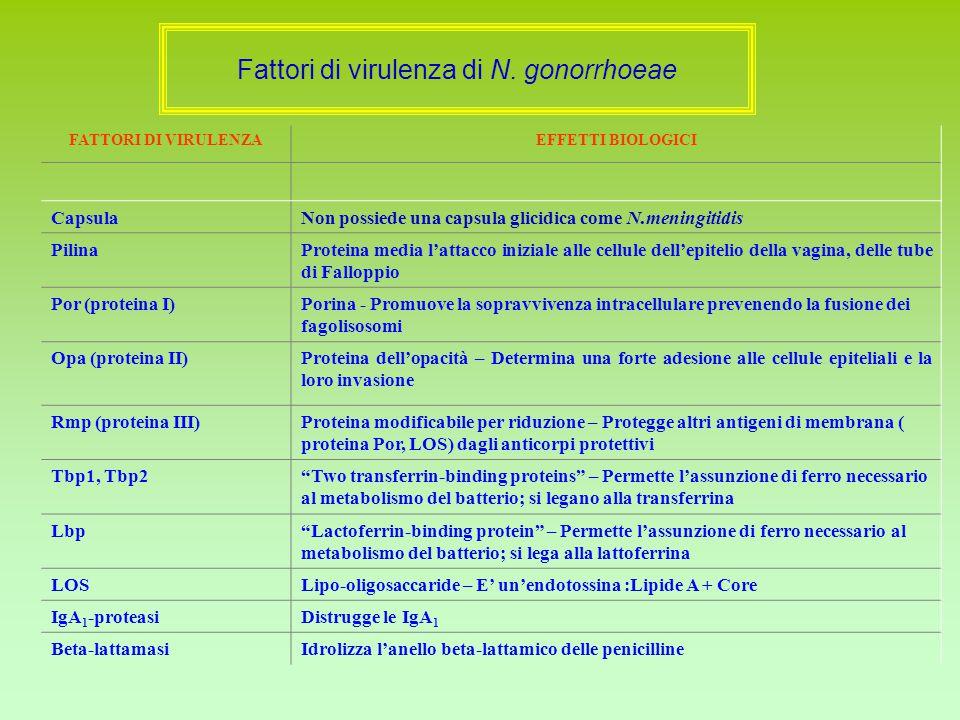 Fattori di virulenza di N. gonorrhoeae