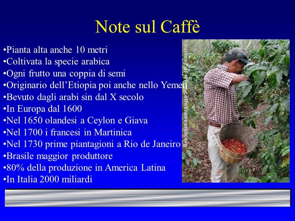 Note sul Caffè Pianta alta anche 10 metri Coltivata la specie arabica